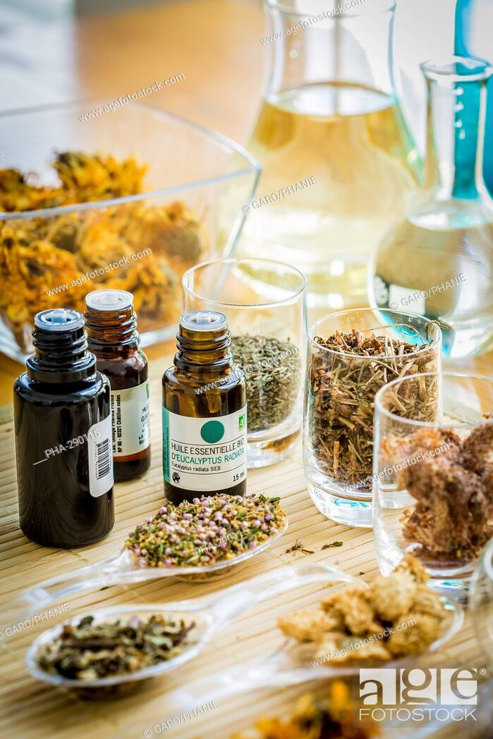 Stock Photo: Medicinal herbs, assortment of dried herbs and essentiel oil.