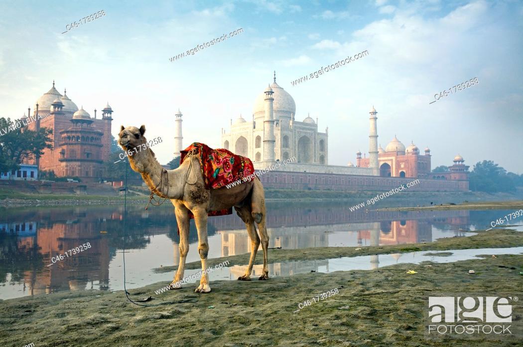 Stock Photo: Taj Mahal, seen from the East along the Yamuna River  Uttar Pradesh  Agra, India, Ganges River.