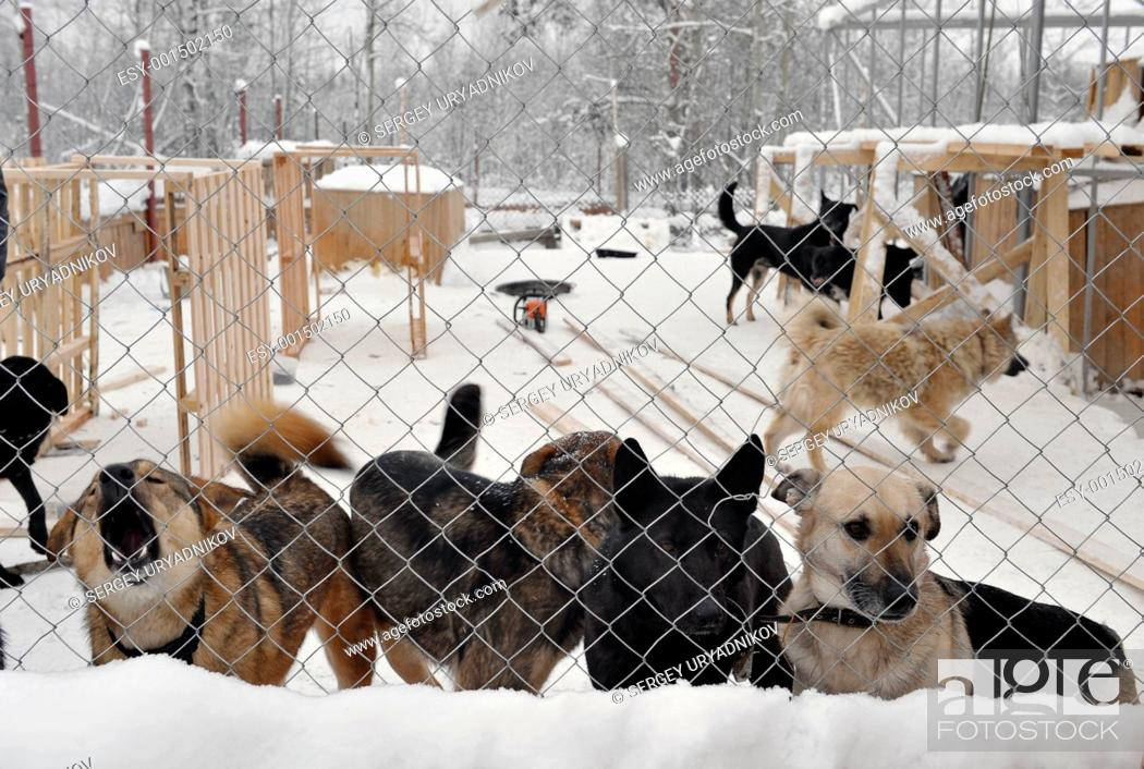 Stock Photo: Shelter for stray dogs.