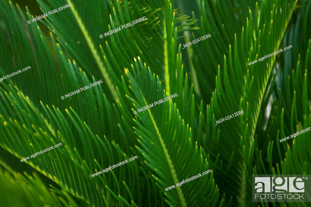 Stock Photo: Close-up of the fronds of a plant.