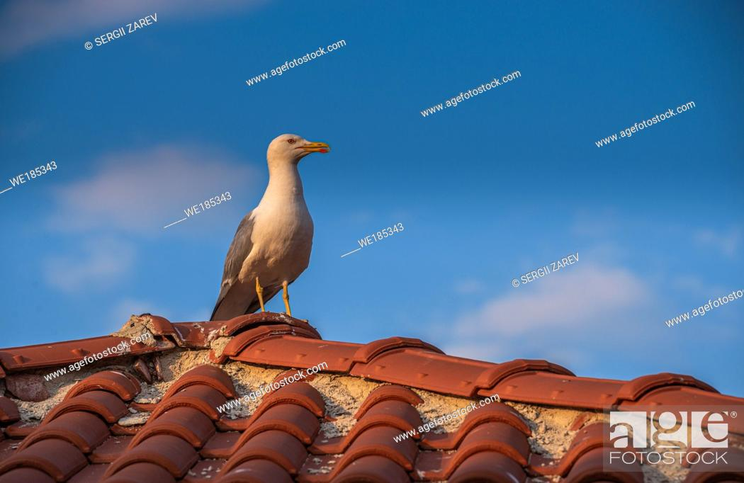 Stock Photo: Seagull on the roof of an old house in Nessebar, Bulgaria.
