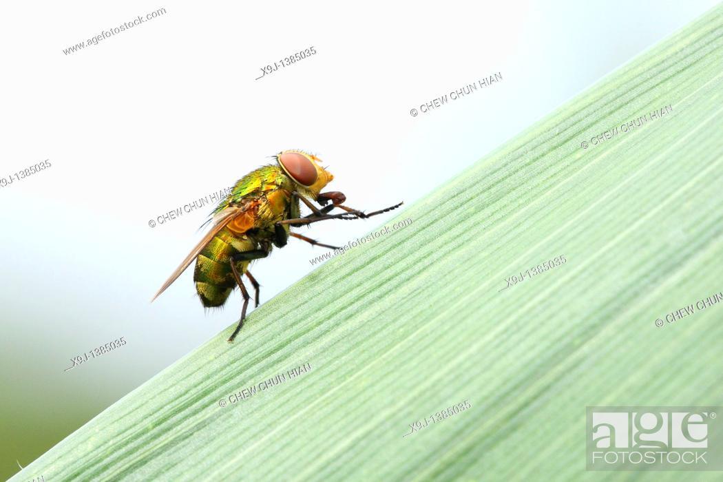 Stock Photo: Beetle, Fly.