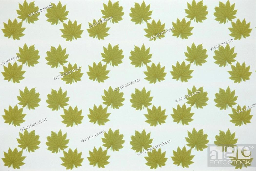 Stock Photo: The Sheet Of Green Leaves.