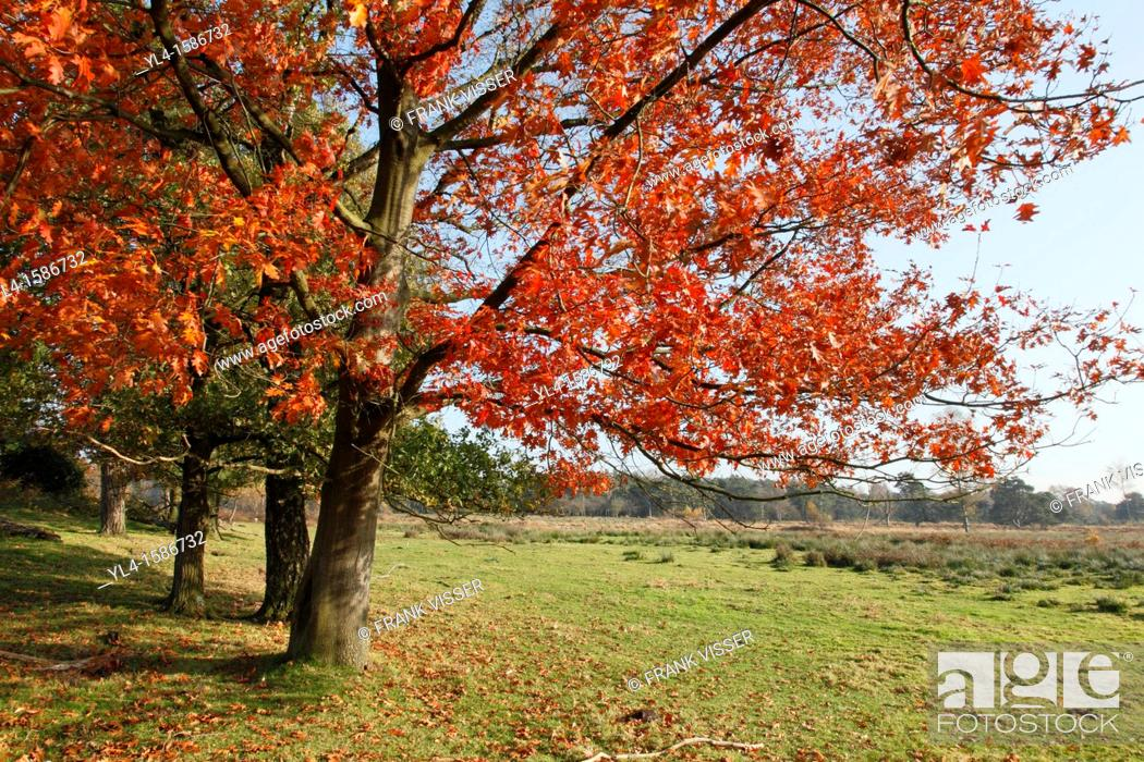 Stock Photo: Autumn colors, Leersumse veld, The Netherlands.