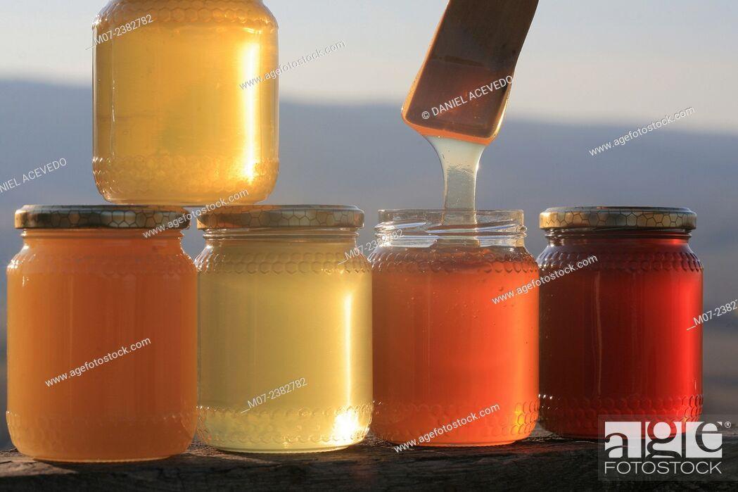 Imagen: Italian Honey, Tuscany, Europe.