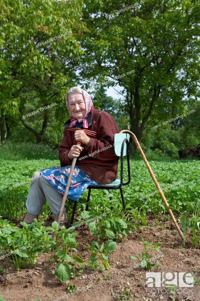 Stock Photo: old peasant woman with a cane working in potato field.
