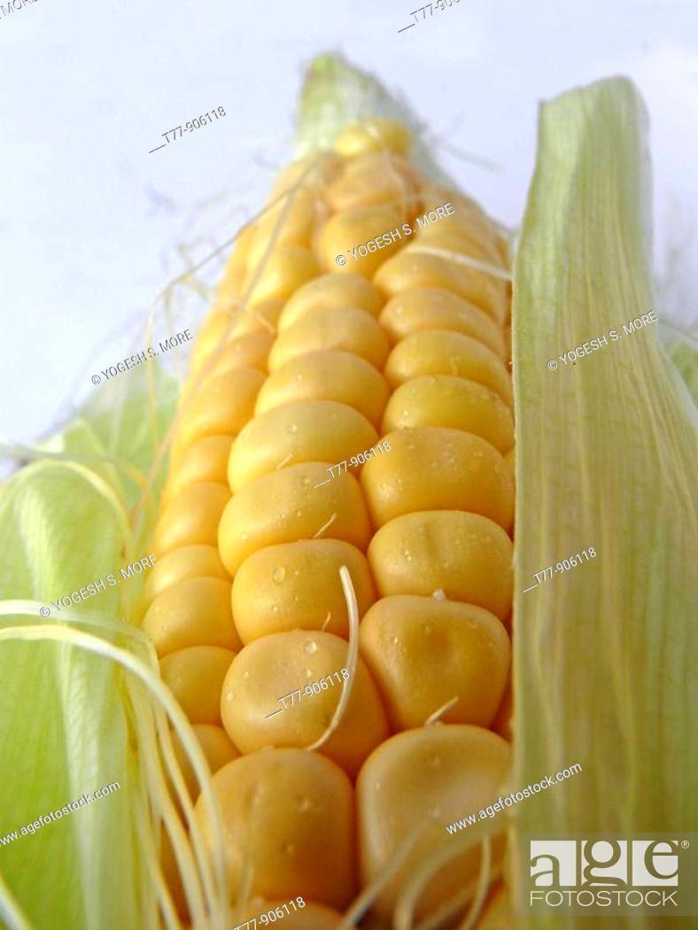 Stock Photo: Sweet Corn.