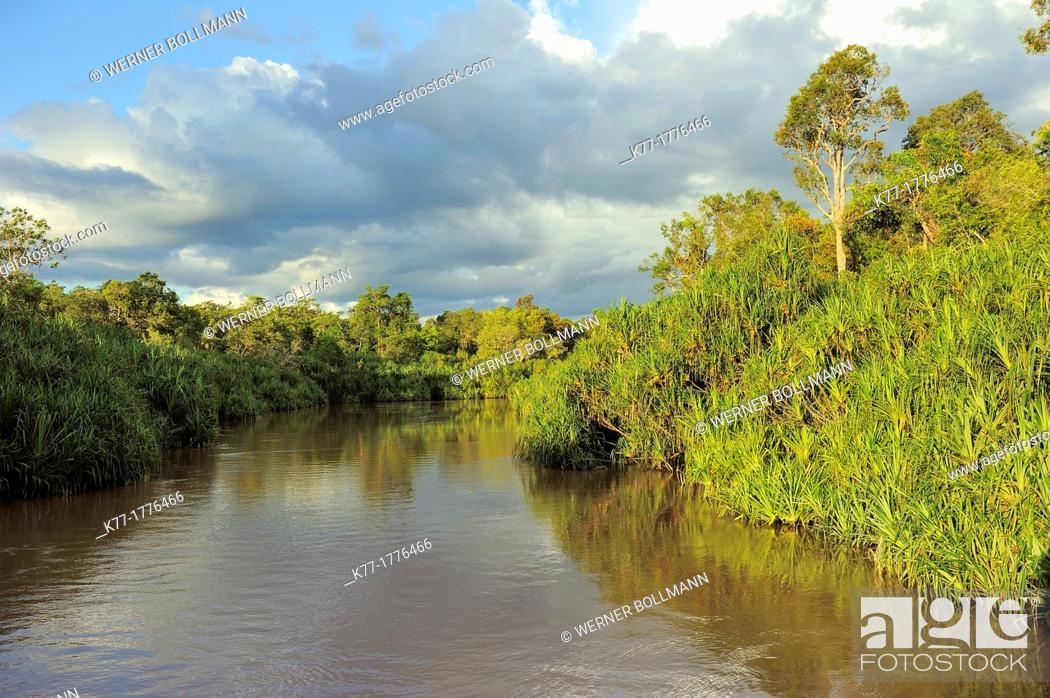 Stock Photo: Sekonyer River with Pandanus Palms Pandanus spec , Province Kalimantan, Borneo, Indonesia.