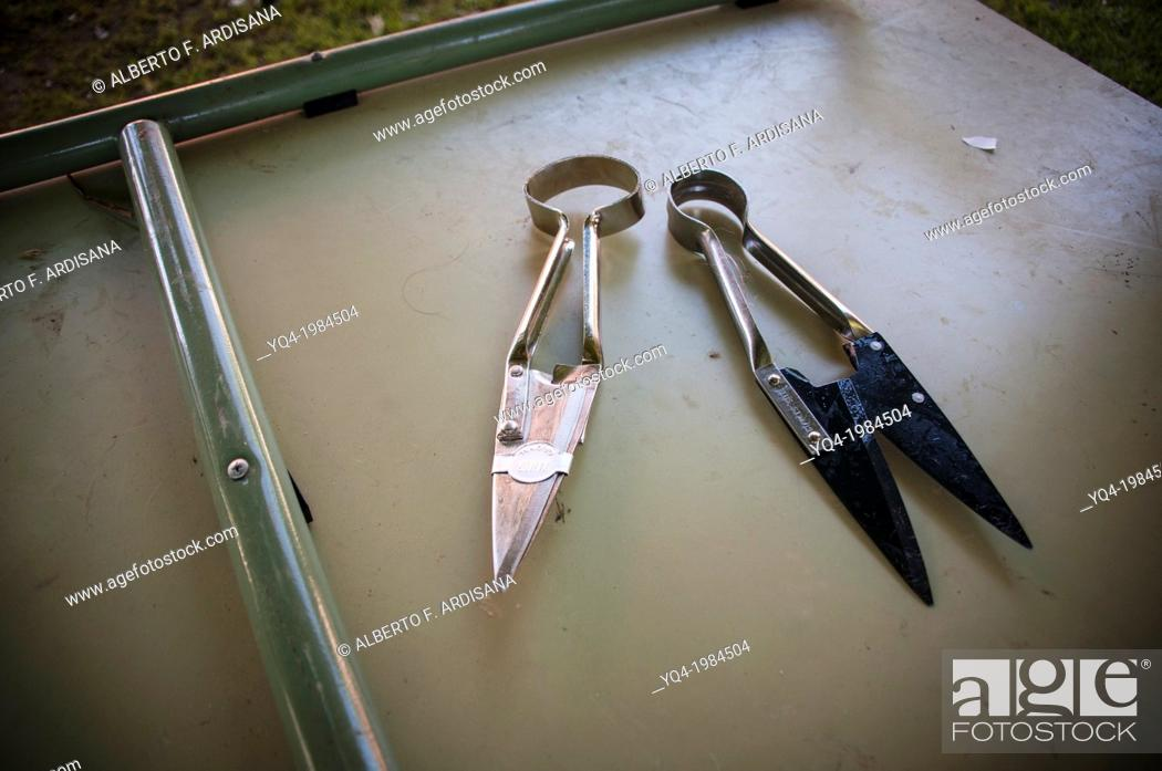 Stock Photo: Special scissors for shearing sheep. Asturias, Spain.