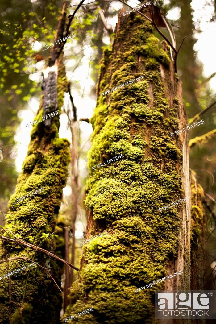Stock Photo: close up of moss on tree.