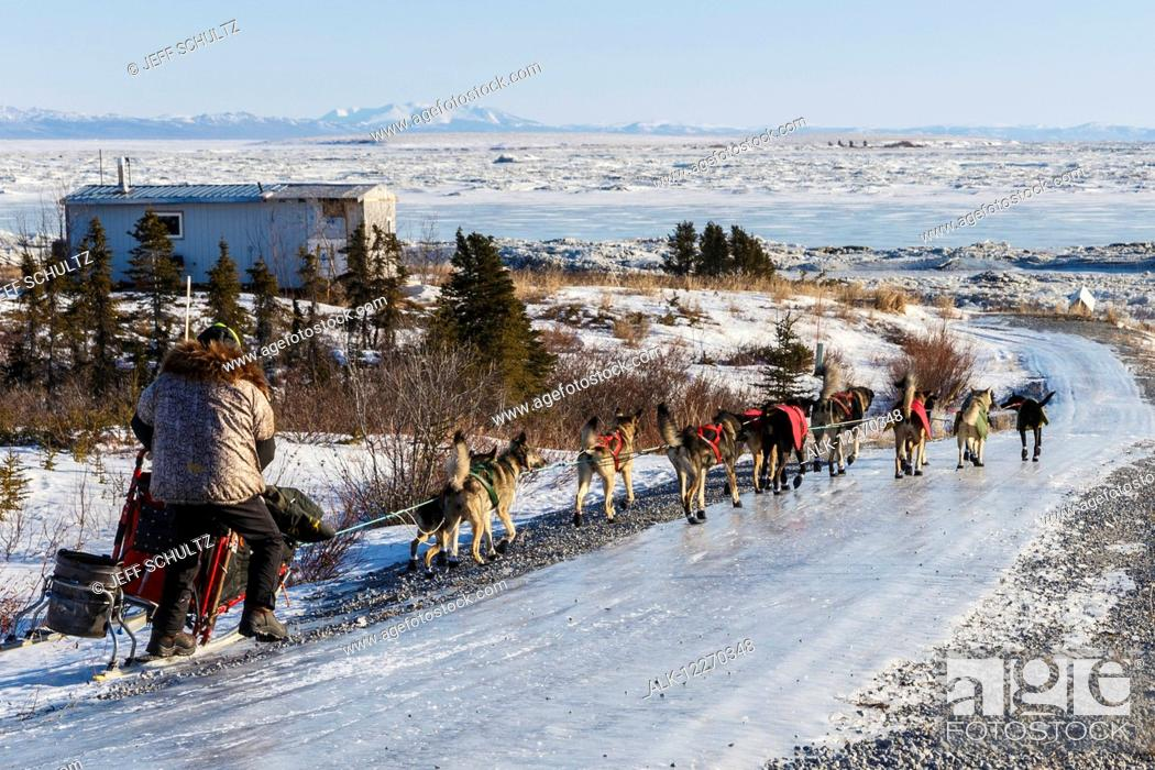 Imagen: Jeff King runs down the glare ice road has he leaves Koyuk during the Iditarod Sled Dog Race 2014.