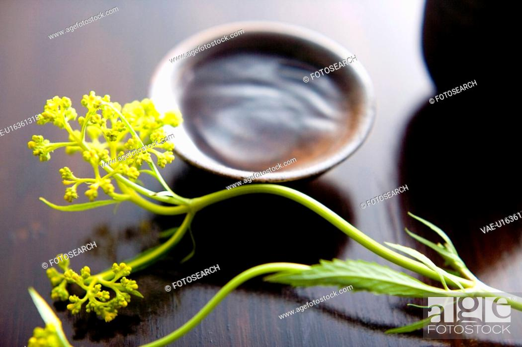 Stock Photo: Patrinia scabiosaefolia.