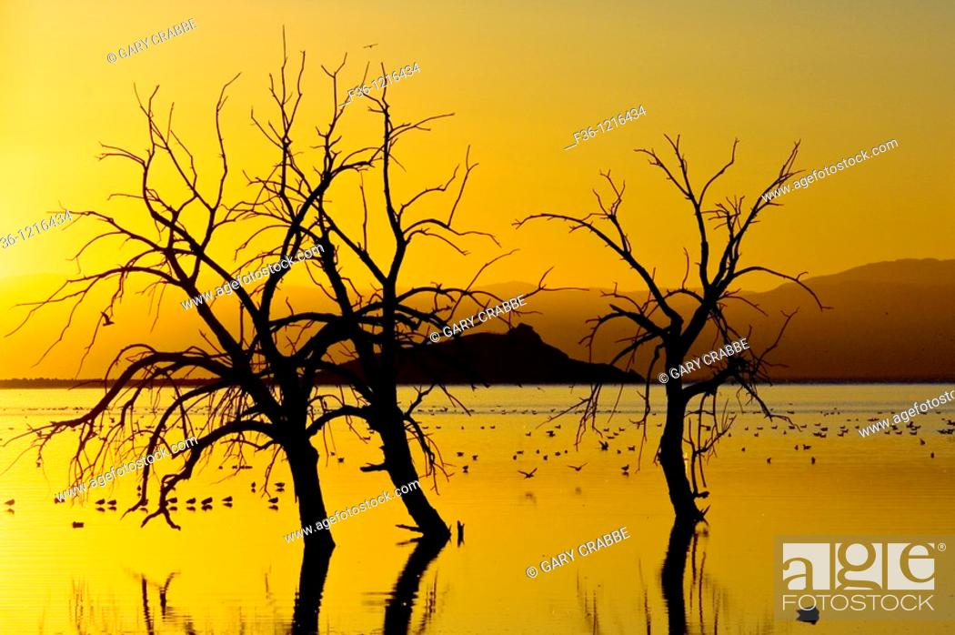 Stock Photo: Birds and barren trees at sunset at the Salton Sea, Imperial Valley, California.
