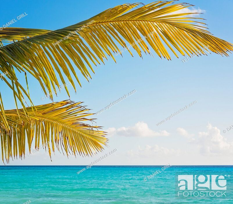 Stock Photo: Palm tree against turquoise sea.