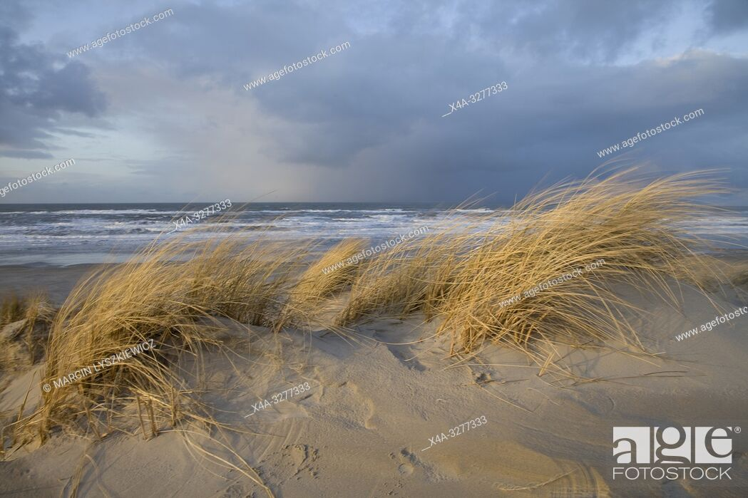 Stock Photo: dunes on Wadden Sea coast, Terschelling island, Netherlands.