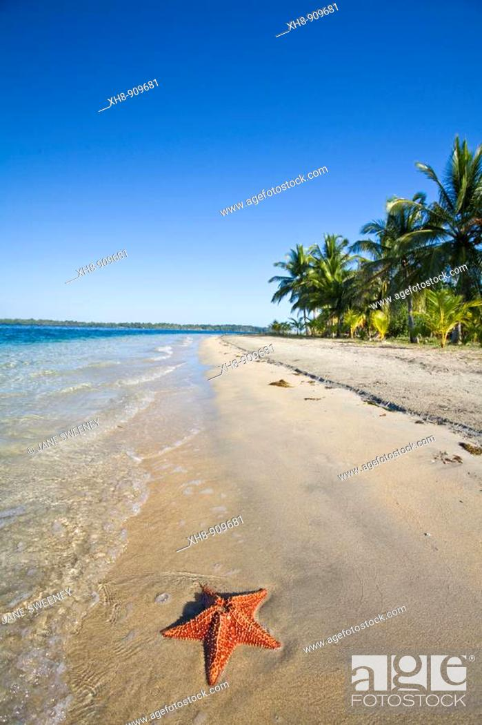 Stock Photo: Starfish on Star Beach, Colon Island, Bocas del Toro Province, Panama.