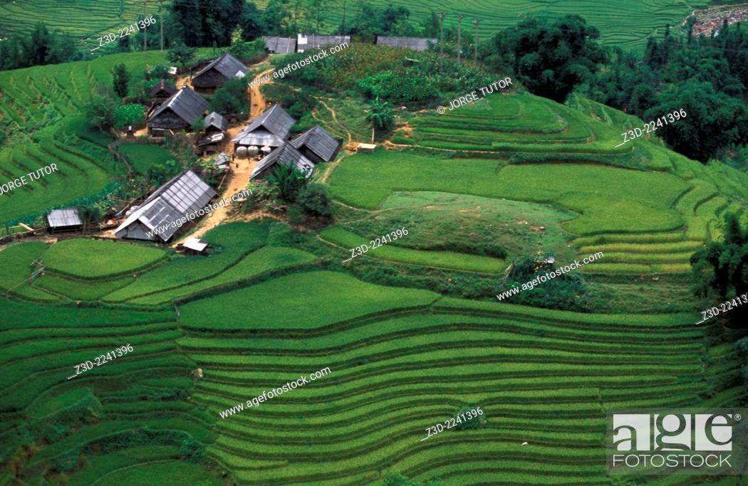Imagen: Rice terraces near Ta Van, Sapa, Vietnam.
