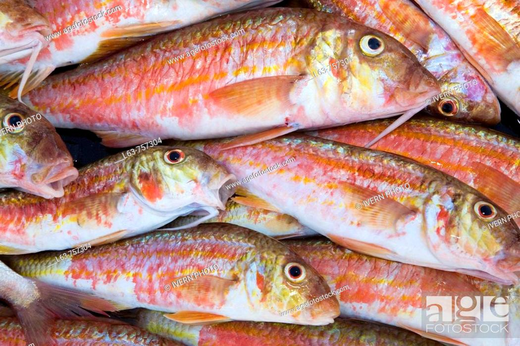 Photo de stock: Fresh red mullets, just fished. Cambrils. Tarragona province. Spain.
