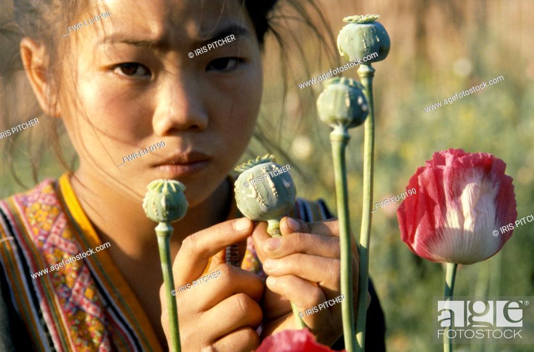 Photo de stock: Papaver somniferum, Poppy, Opium poppy, Pink subject.