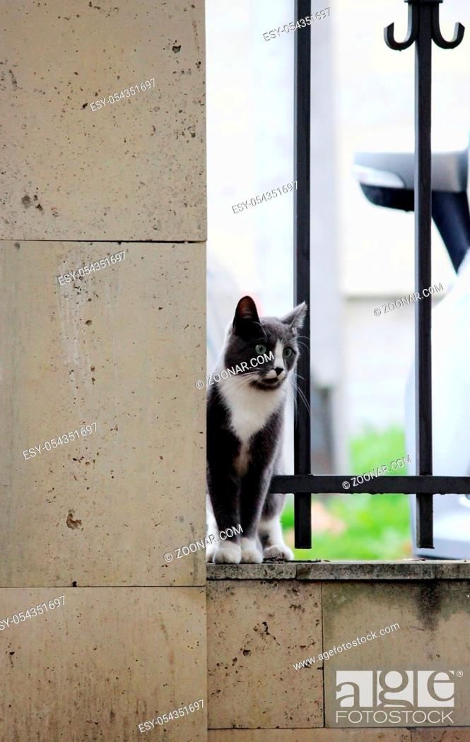 Stock Photo: gray cat with white paws hugging grille enthusiastically looking at bird.