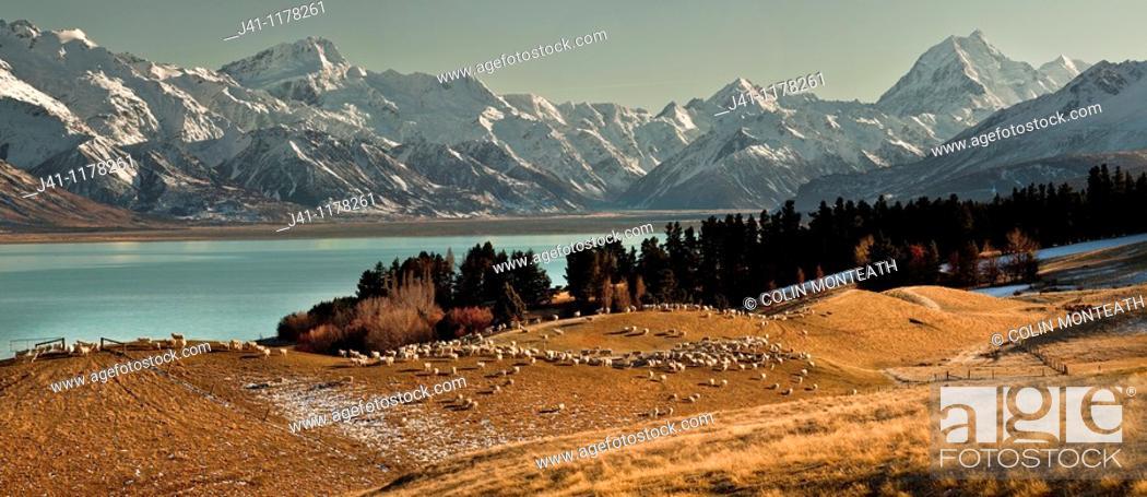Stock Photo: High country sheep station above Lake Pukaki, Mt Sefton left and Aoraki / Mt Cook, winter, Canterbury, New Zealand.