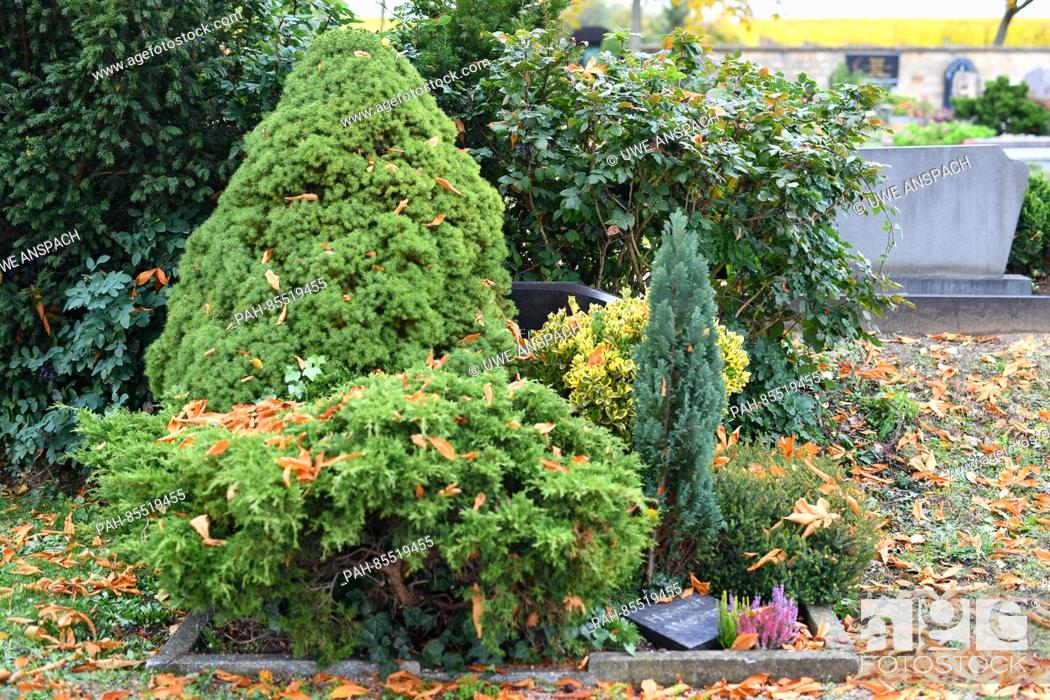 Stock Photo: The overgrown Trump family headstone seen in the cemetery in Kallstadt, Germany, 09 November 2016. The grandparents of real estate billionaire and future US.