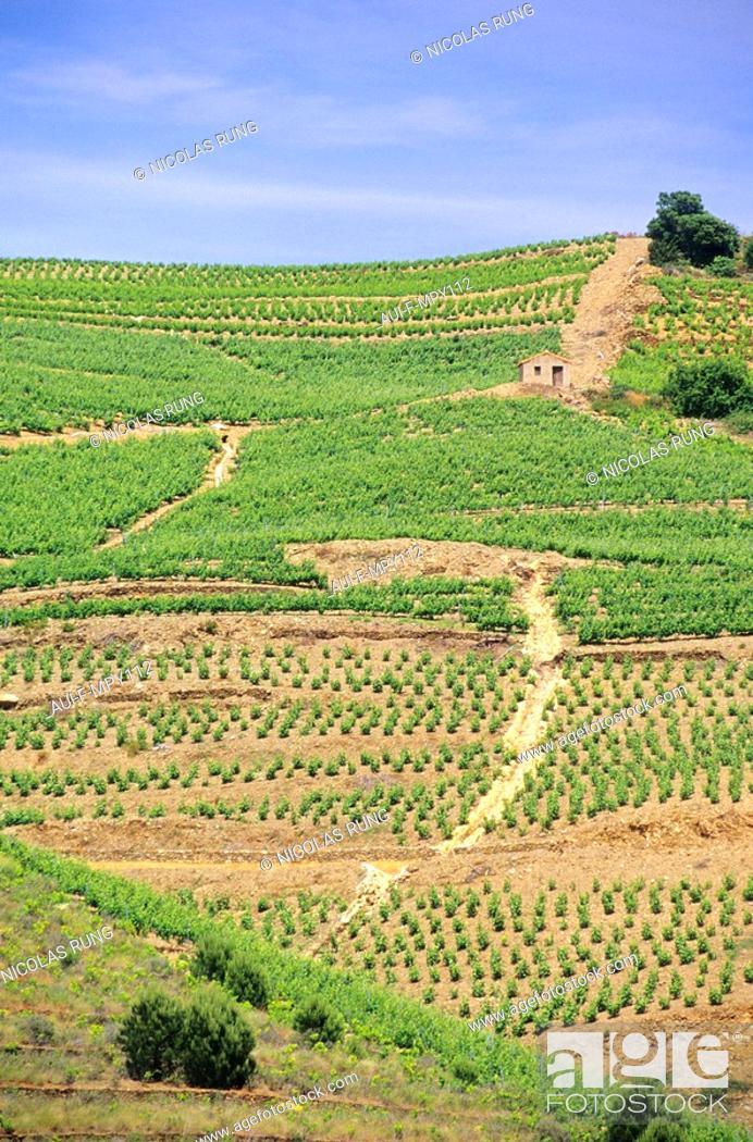Photo de stock: France - Pyrenees Orientales - Vignobles Cote Vermeille.