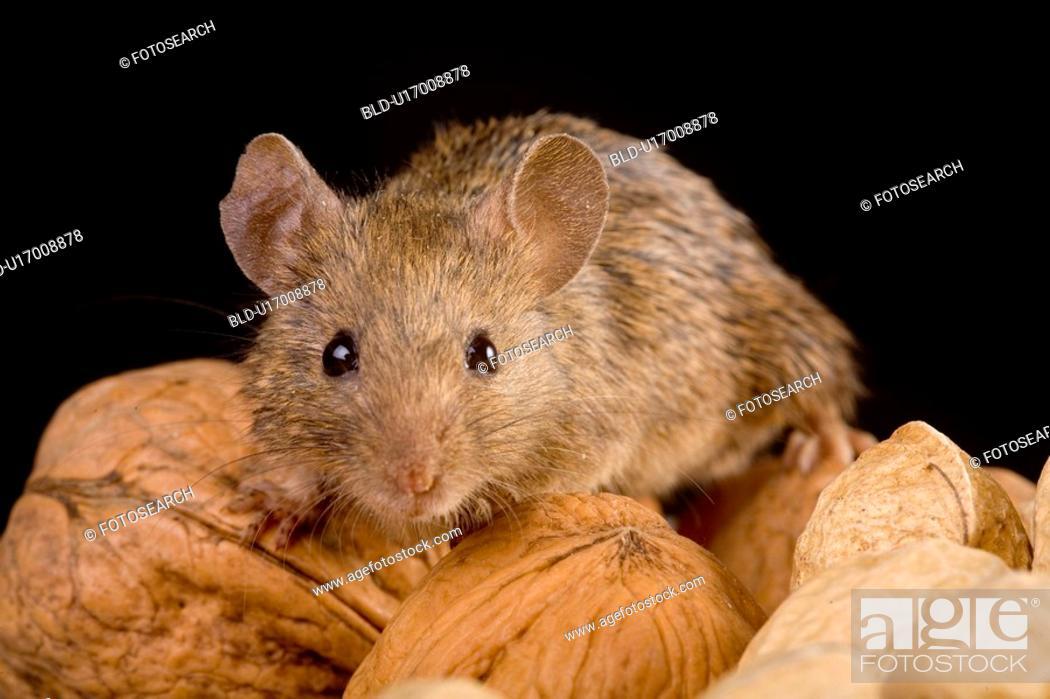 Stock Photo: tierportraits, alfred, aliment, animal, animal portrait, animals.