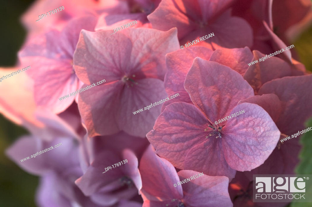 Stock Photo: Flowers.