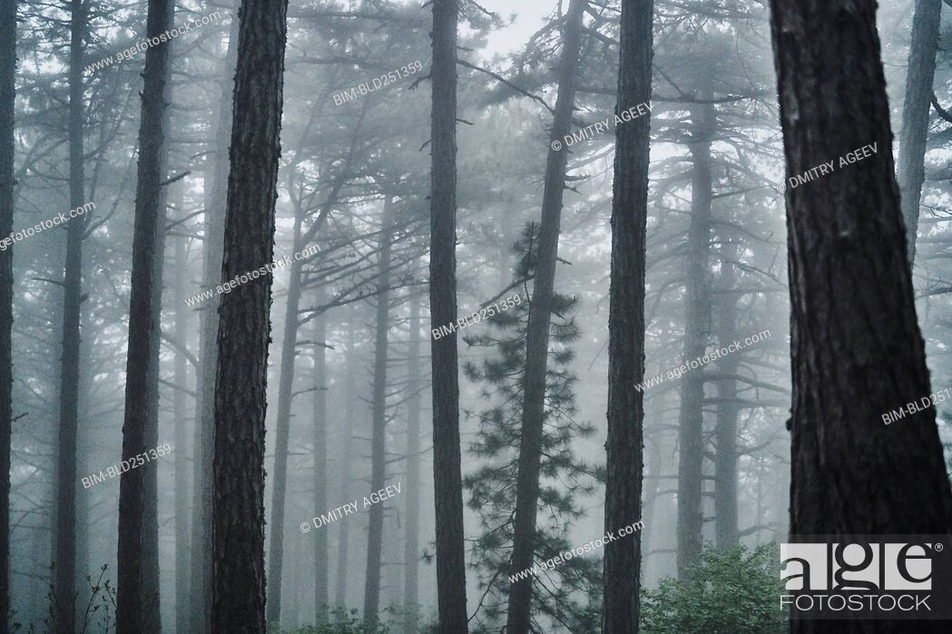 Stock Photo: Fog in forest.
