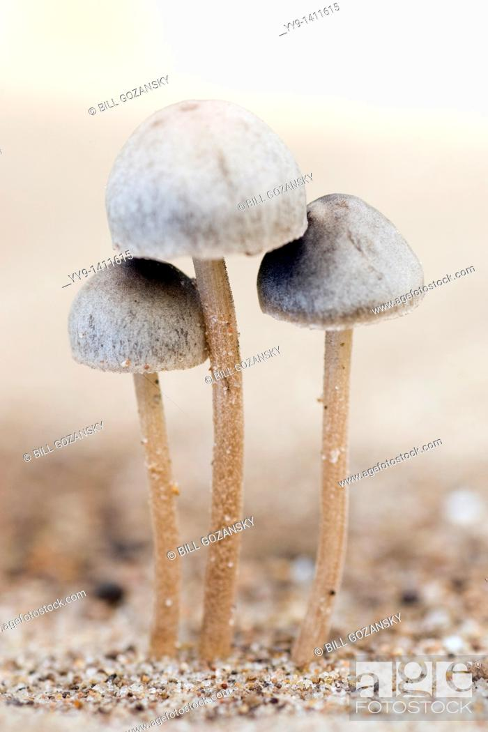 Stock Photo: Mushrooms - Los Novios Ranch - near Cotulla, Texas USA.