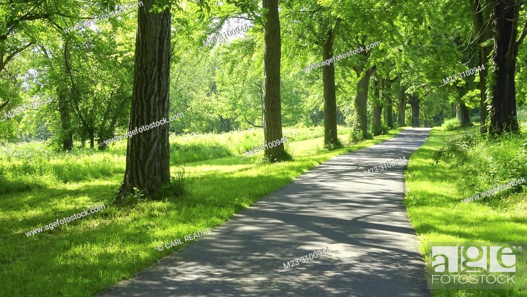 Stock Photo: A walking path in summer, Pennsylvania, USA.