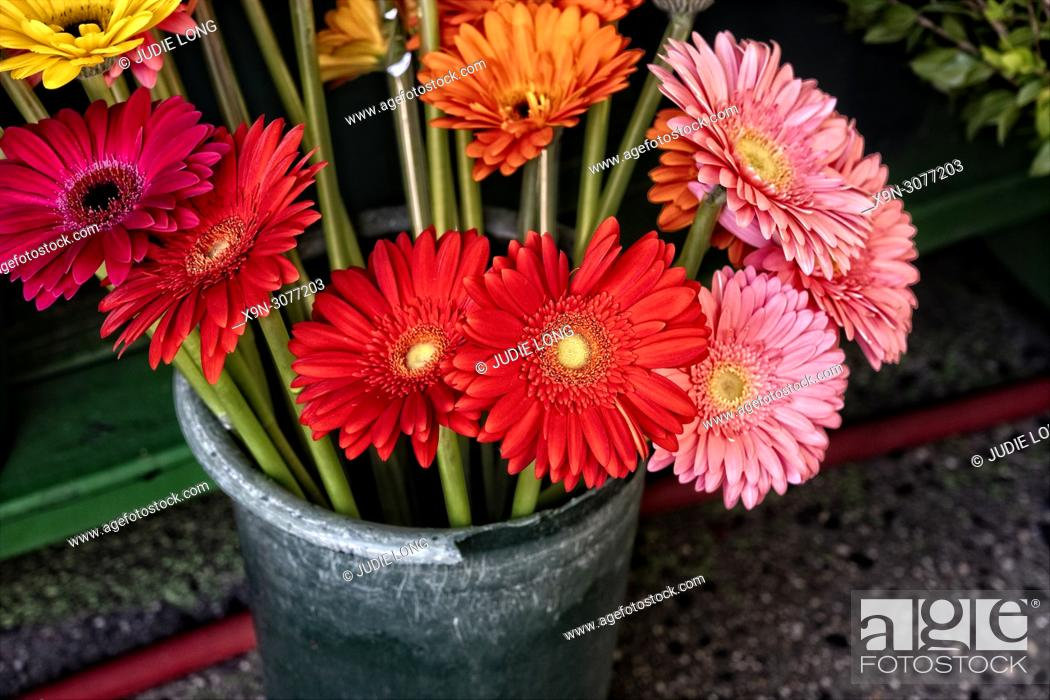 Imagen: Colored Daisies Offered for Sale at an Outdoor Market, Displayed in Green Plastic Vases in Manhattan, NYC.