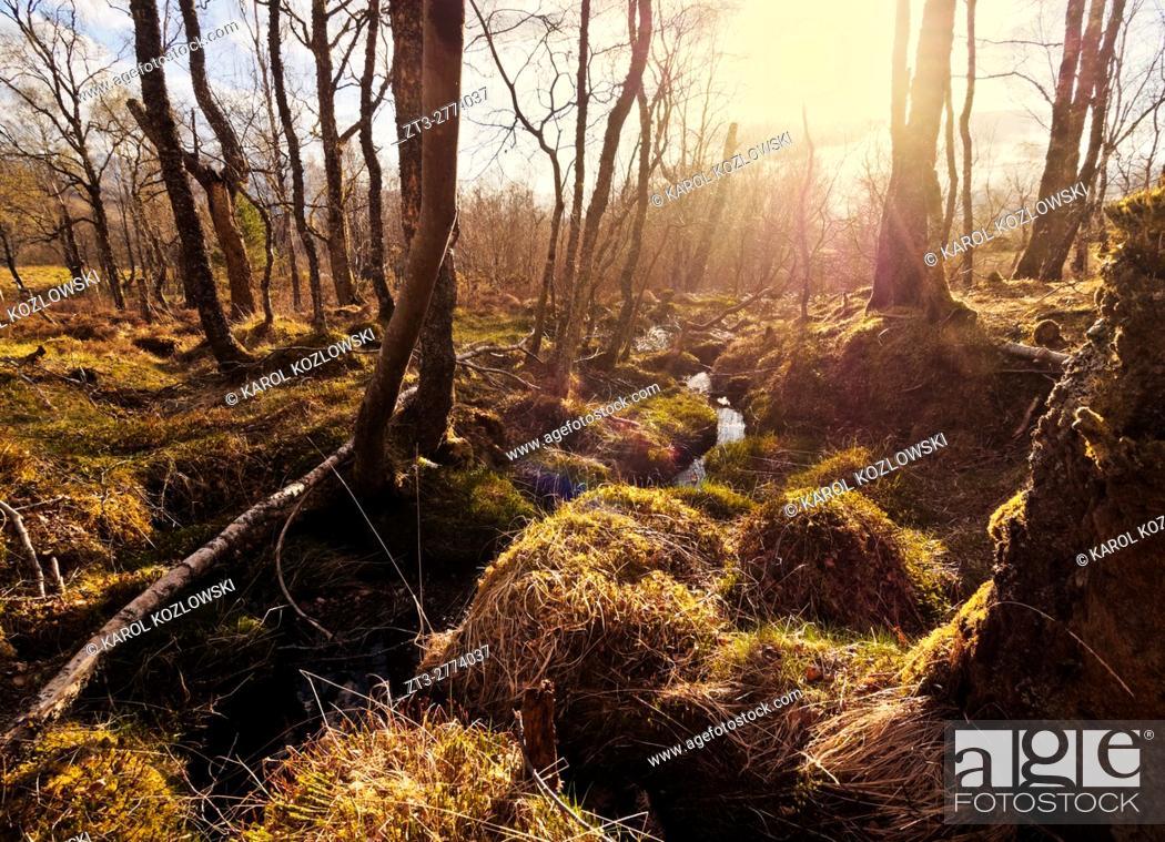 Imagen: UK, Scotland, Highlands, Forest of the Roy Bridge.