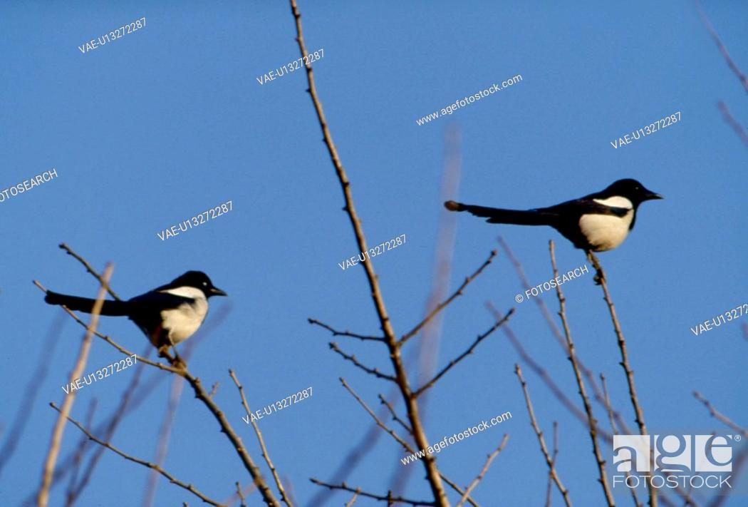 Stock Photo: sky, nature, branch, tree, scene, wild animal, landscape.