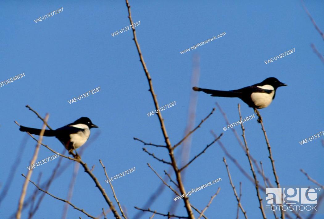 Stock Photo: sky, nature, branch, tree, scene, wild animal, landscape.