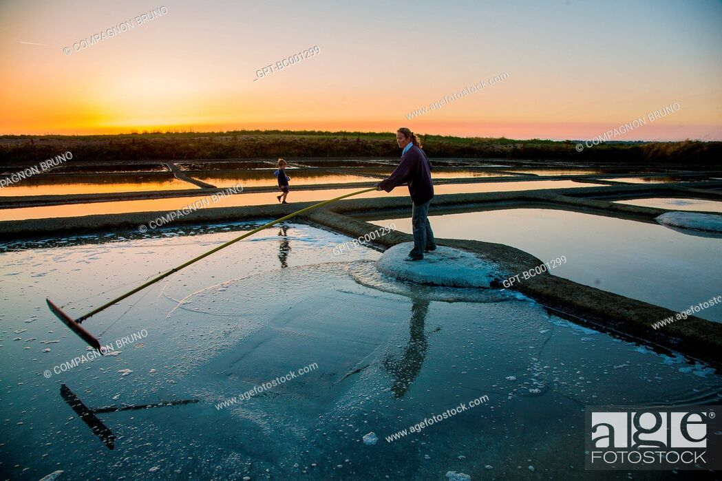 Stock Photo: SALT WORKER COLLECTING SEA SALT FROM THE SALT MARSHES OF THE GUERANDE PENINSULA, SALT FROM A SALT PAN, FLEUR DE SEL, THE SALT PANS OF GUERANDE (44).