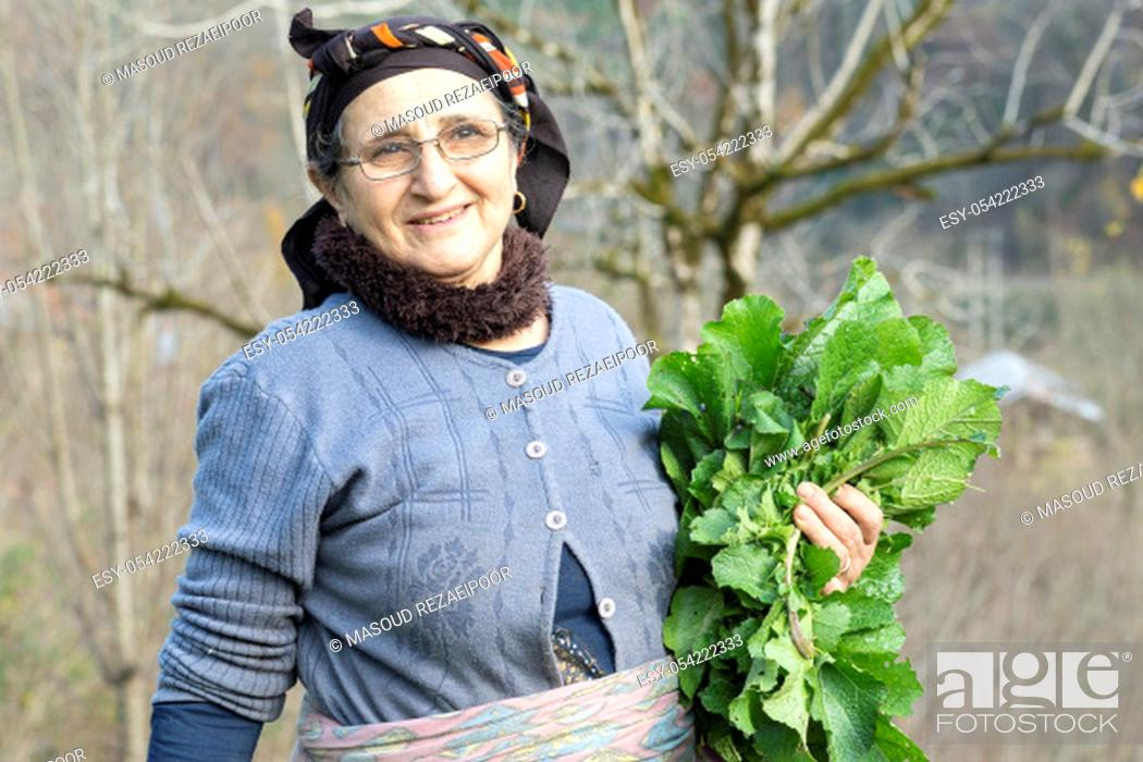 Stock Photo: Portrait of an elderly woman picking some of fresh herbal vegetables from garden, healthy lifestyle concept.