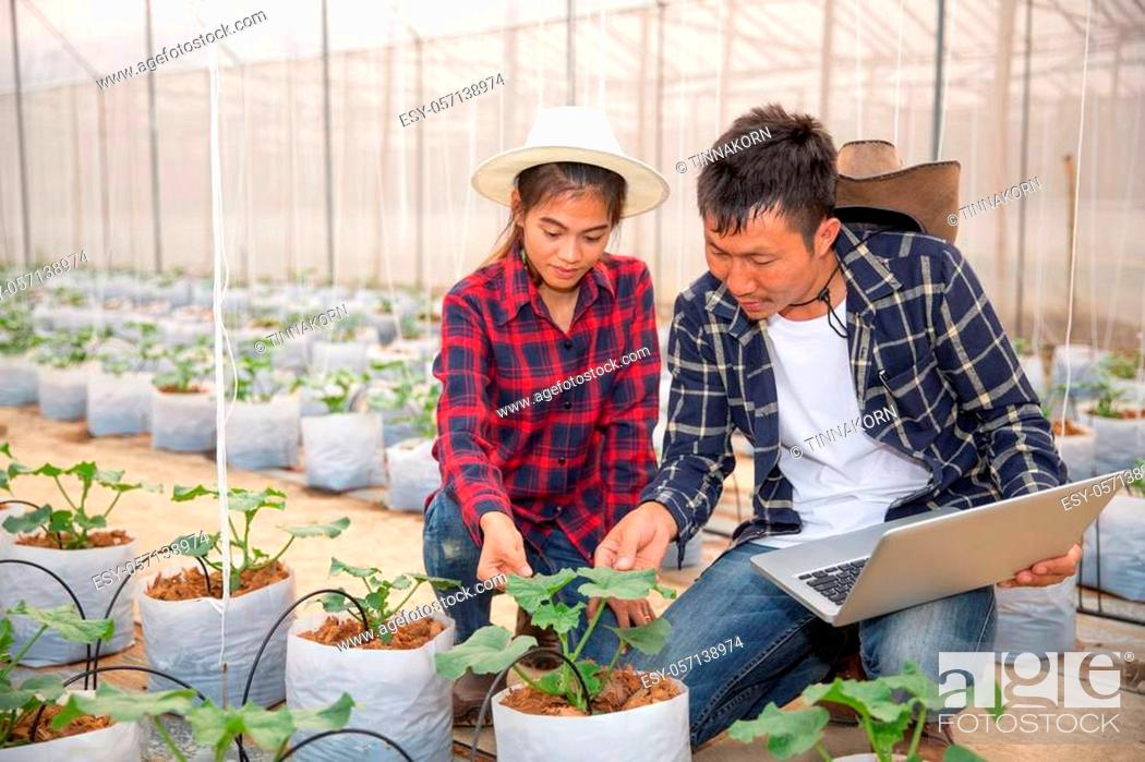 Stock Photo: Agronomist examining plant in melon field, Couple farmer and researcher analyzing melon plant.
