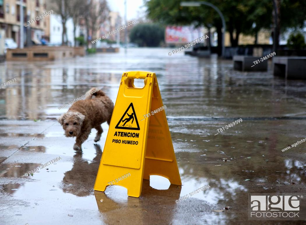 Stock Photo: Dog walking along wet street, Spain.