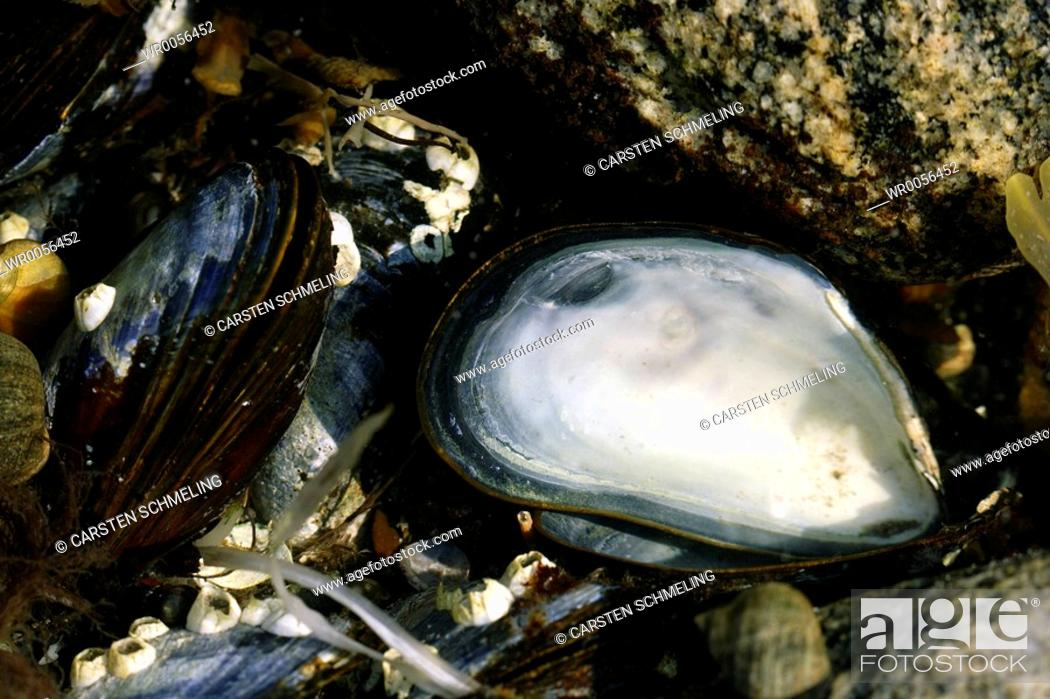 Stock Photo: Sea shells.