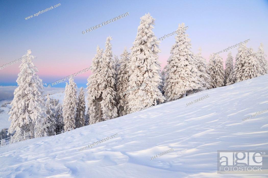 Imagen: Verschneite Tannenbäume, Schweiz.
