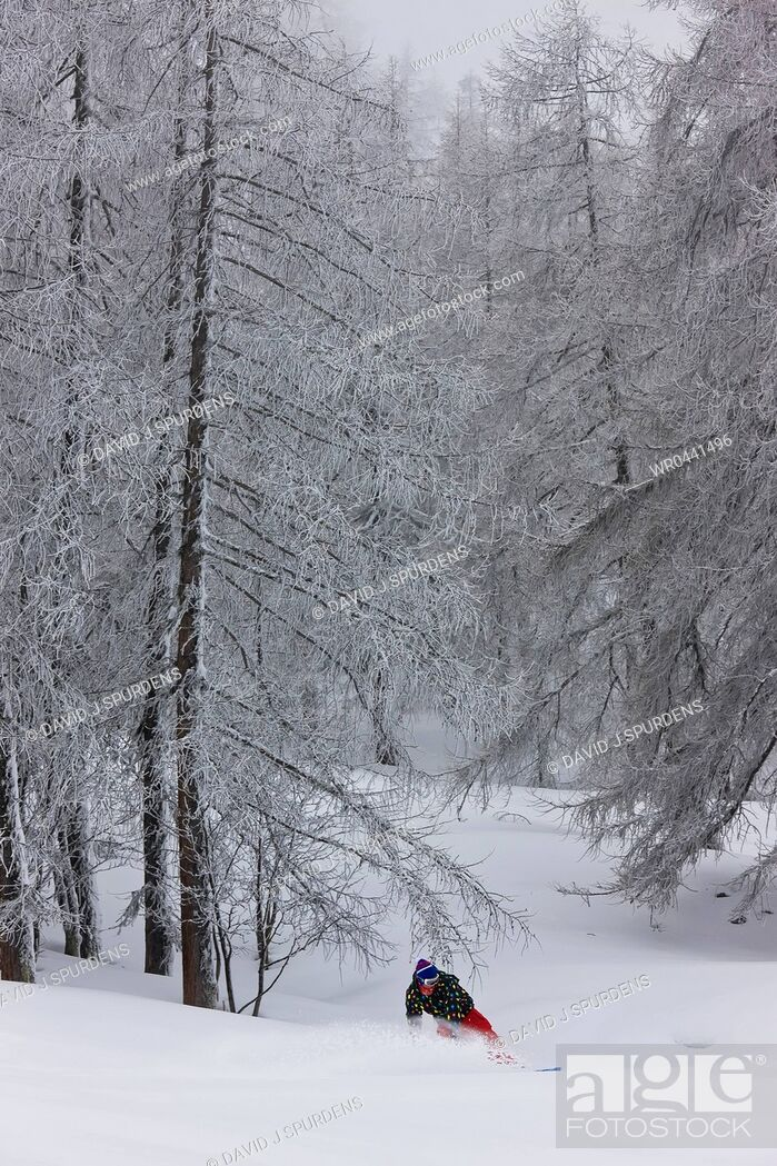 Stock Photo: A snowboarder riding fast through a forest thows up a plume of snow from the board.