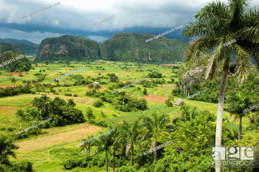Stock Photo: Valle de Viñales, Pinar del Rio, Cuba.