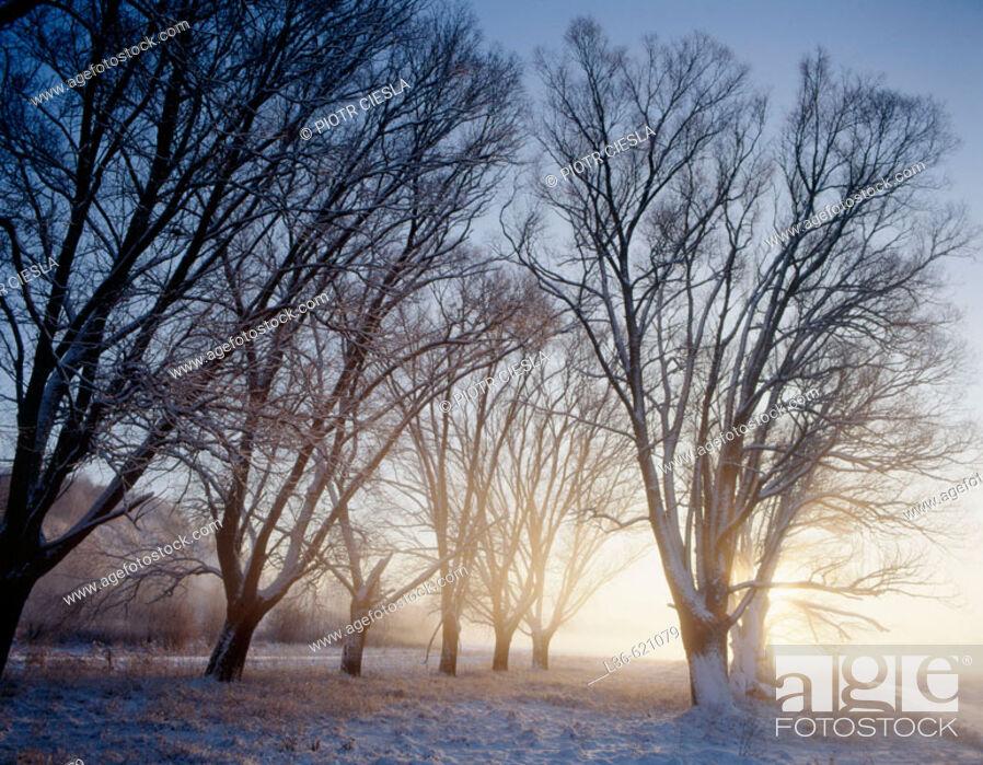 Stock Photo: Winter morning.