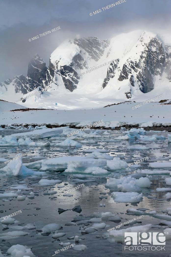 Stock Photo: Cuverville Island, Antarctic Peninsula.