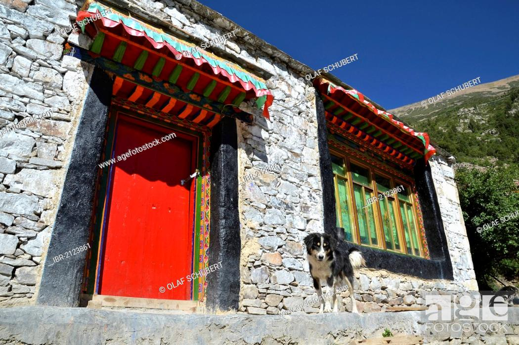 Stock Photo: Tibetan dog in front of a red door of a traditional Tibetan building, home of the nunnery in the mountains of Reting Monastery, Mount Gangi Rarwa, Himalaya.