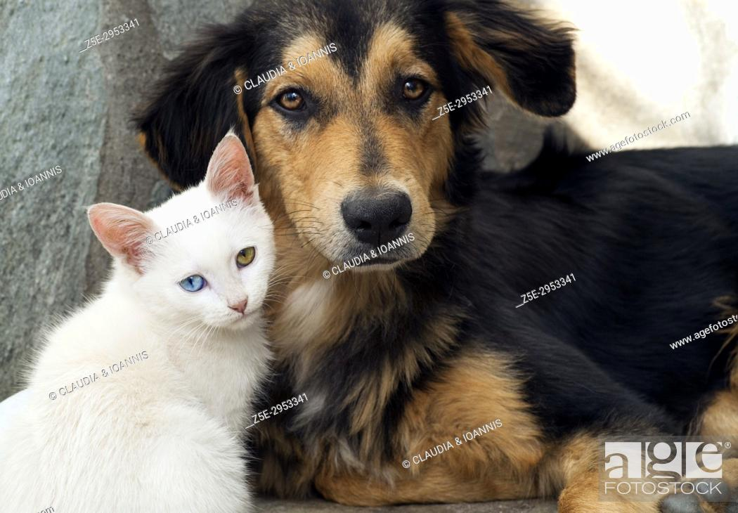 Photo de stock: Close up of a white kitten and a young dog side by side.
