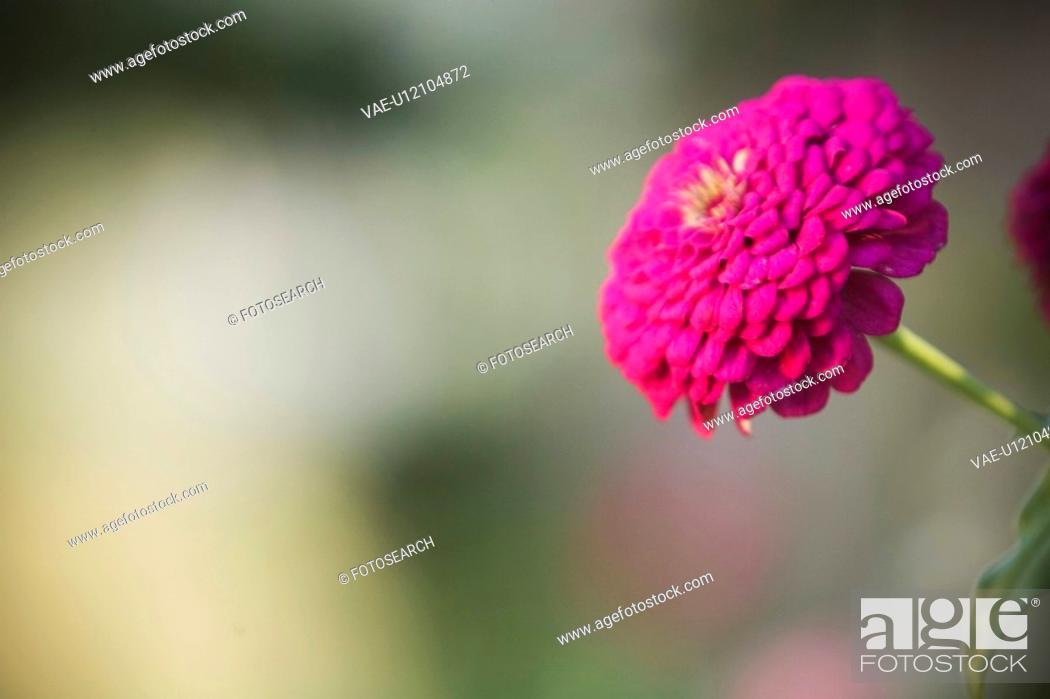 Stock Photo: Beauty, Bloom, Flower, Grow.