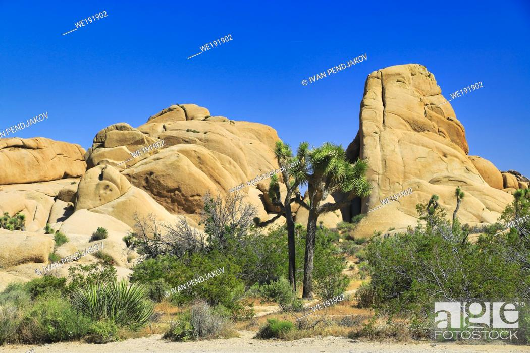 Imagen: Joshua Tree National Park, California, USA.